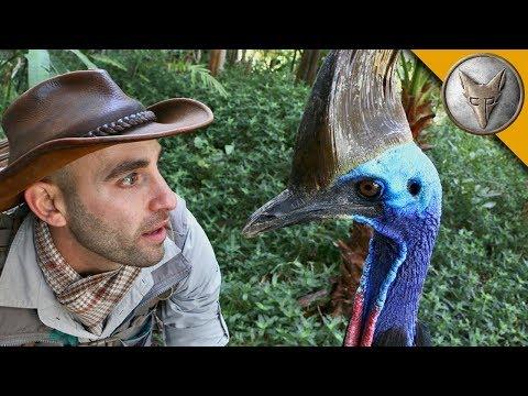 Вопрос: Чем опасен для человека Австралийский казуар?