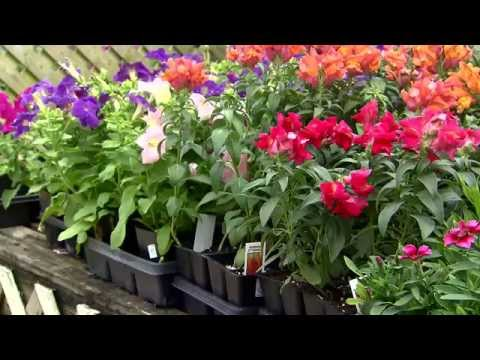 Cool Season Flowers That Tolerate Heat