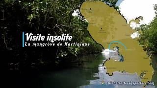 La mangrove, une visite originale et insolite