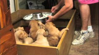 Teaching Puppies Self Control By Personalized Dog Training Llc