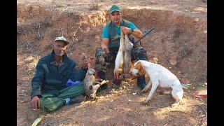 🤠 أفضل لقطات الصيد | يوم كامل في صيد الأرانب و الحجل | Chasse au Maroc 😎