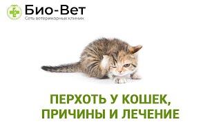 Перхоть у кошек, причины и лечение