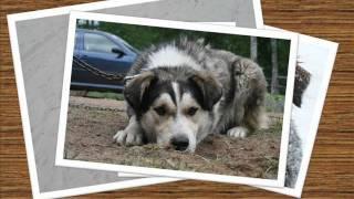 Мир глазами бездомных собак