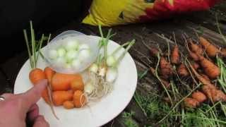 Container Gardening: Growing Carrots in Flower Boxes and Onions in Seed Trays - TRG 2015