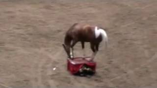 Minnesota State Fair 2009- Funny Horse Video