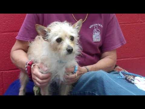 A4956848 Sparky | Norwich Terrier Mix