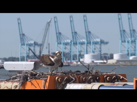 Port of Virginia Environmental Management System