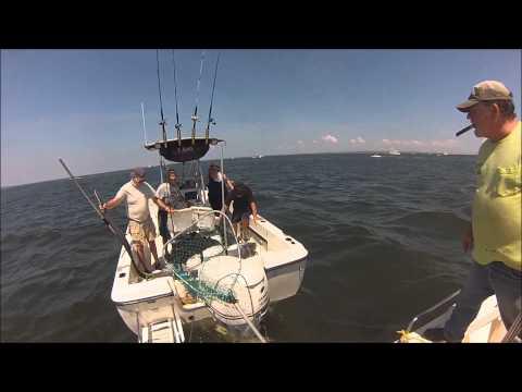 Big Shark Caught Off Nj Shore 2014 (Atlantic Highlands)