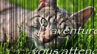 Cats vs Cats - Le forum rpg LGDC