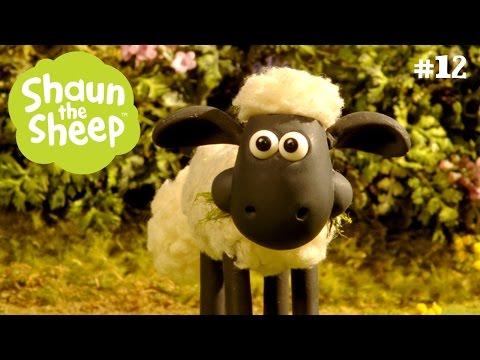 Một rừng bẫy - Những Chú Cừu Thông Minh