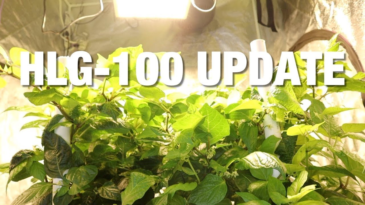 HLG-100 quantum board grow light update #2 - Horticulture Lighting Group