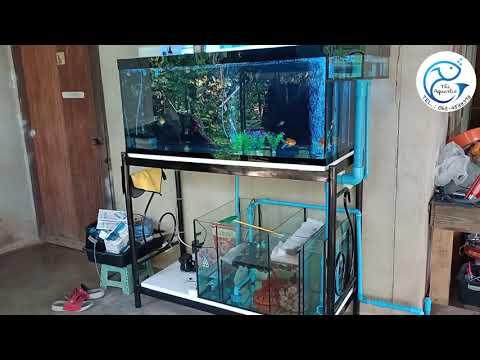 รีวิวตู้ปลา 48*20*20 กรองล่าง By The Aquartic