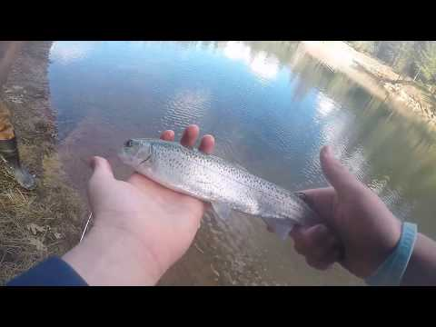 Rollins Resevoir Trout Fishing