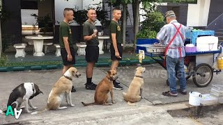Dogs Queue Up next to Soldiers for Grilled Pork