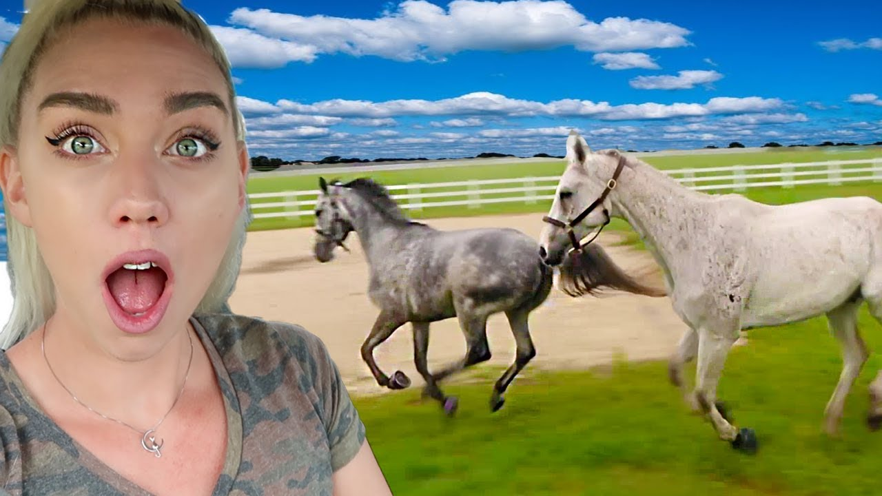 MY HORSES MEET FOR THE FIRST TIME! Second Day at our Farm! | NICOLE SKYES