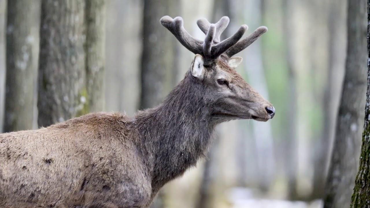 20 ans d'émerveillement dans le Parc Naturel Régional du Gâtinais Français