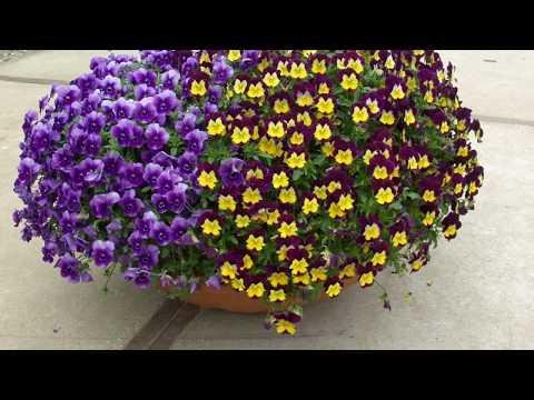 Рано зацветающие цветы от Биотехники.