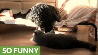Cat refuses to let dog sleep in