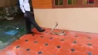 King Cobra catching Vava Suresh 2014