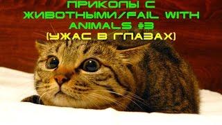 Приколы с животными/fail with animals #3 (Ужас в глазах)