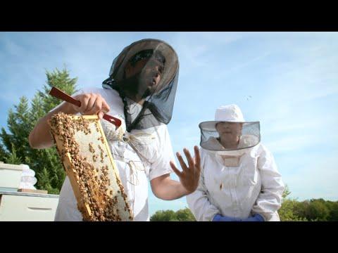 Saving the Mighty Honey Bee