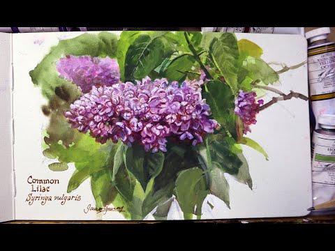 Sketching Lilacs At The New York Botanical Garden
