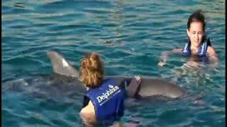 Nadando con delfines en Xcaret Rivera Maya -Mexico