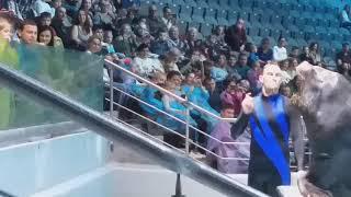 Москвариум / морской лев Рокки / шоу ,,Кругосветное путешествие'' / 12.10.19.