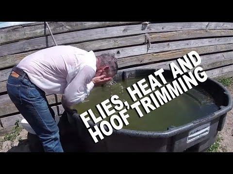Got Flies? Horn Fly Invasion | Low Country Cowboys Episode Five