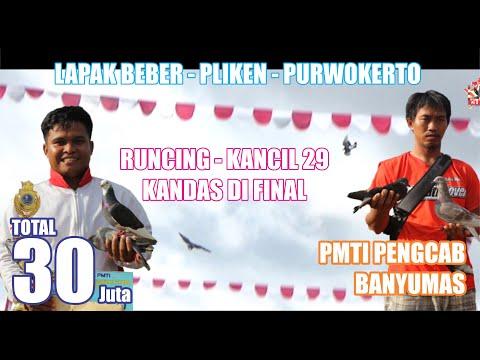FINAL ADU CEPAT RUNCING-KANCIL29 Kandas Di Final PMTI Pengcab Banyumas Lapak BEBER-pliken-Banyumas