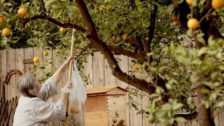 How the Flow Hive enabled a couple to return to beekeeping 20 years later (video)