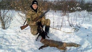 Охота с ягдтерьером на лису (отличная работа)