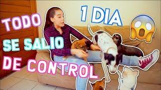 ¡NIÑERA DE 5 CACHORROS POR UN DÍA!! / NatalyPop