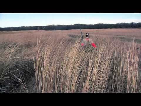 Kansas Upland Game Bird Hunting - 1415