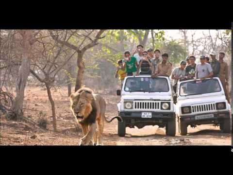 Gir Forest National Park Wildlife Sanctuary Best Places to Visit in Gujarat