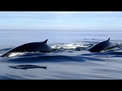 Whale Watching - Tadoussac, Quebec, Canada