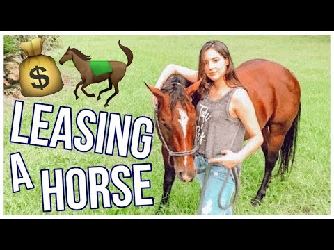 Leasing A Horse! | Beginner's Guide To Horses Pt.3