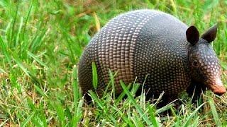 Животные и редкие животные - коллекция африканские дикие животные