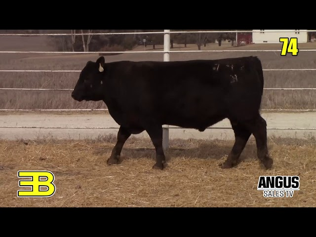 Benoit Angus Lot 74