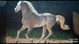 Самые красивые лошади