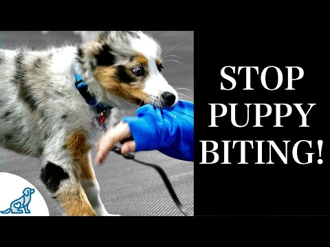 STOP Puppy Biting With These 7 Rules For Training