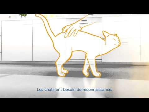 Soulager Le Stress Du Chat - Les 10 Conseils