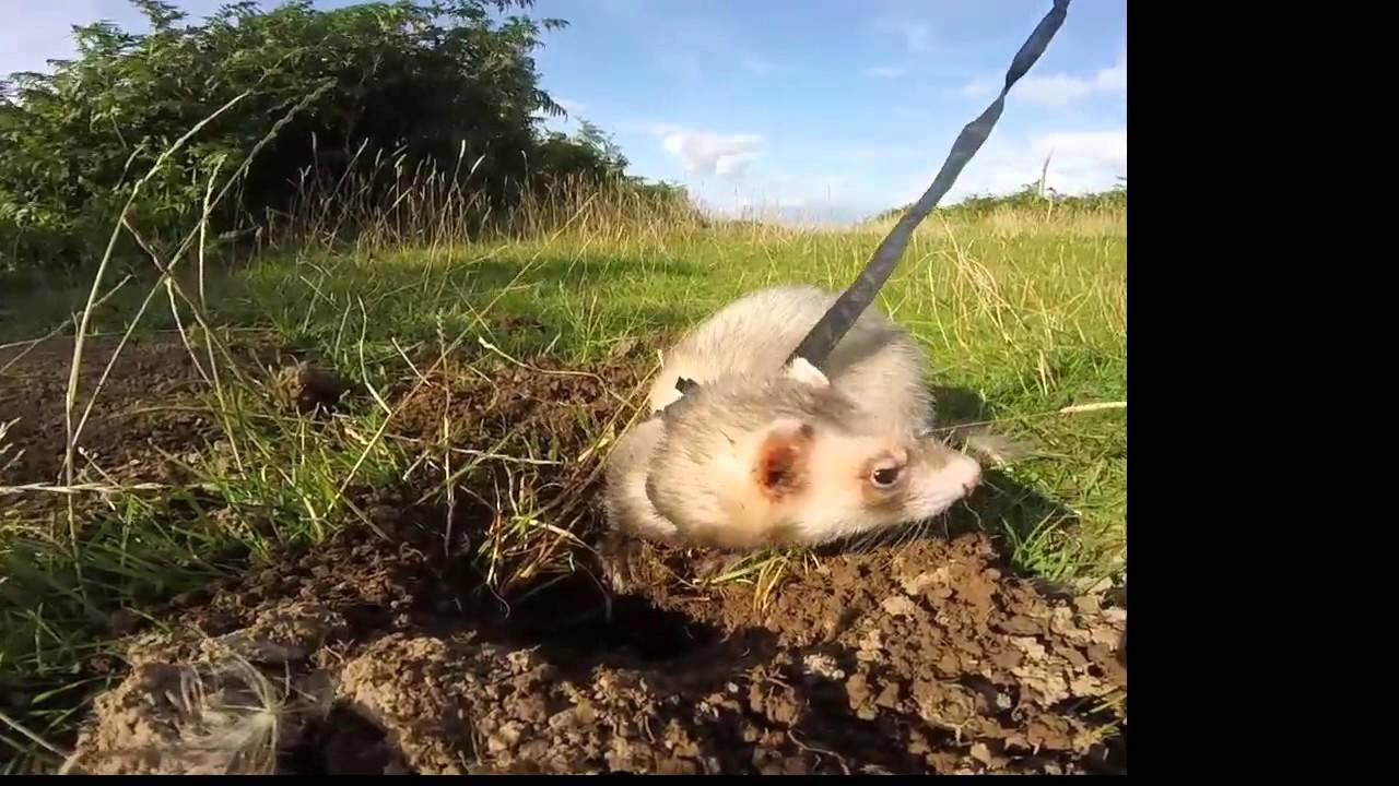 How to Stop a Ferret from Digging in Houseplants forecast