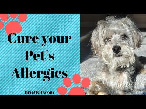 1 Simple Test to Cure Your Dog's Allergies! No More Itching, Scratching, Puking!