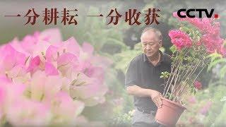 [中华优秀传统文化]有耕耘才有收获  CCTV中文国际