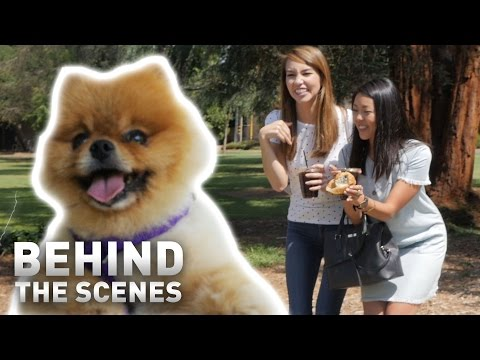 'Pet the Dog' - Behind the Scenes