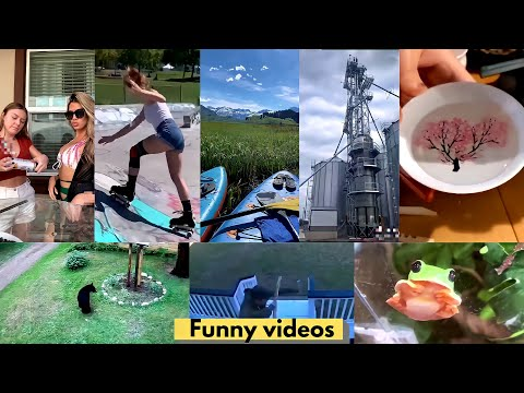 Skating, Beer fail, Strong chair, Nature, Bear scare, Frog, Cat |Funny video#27