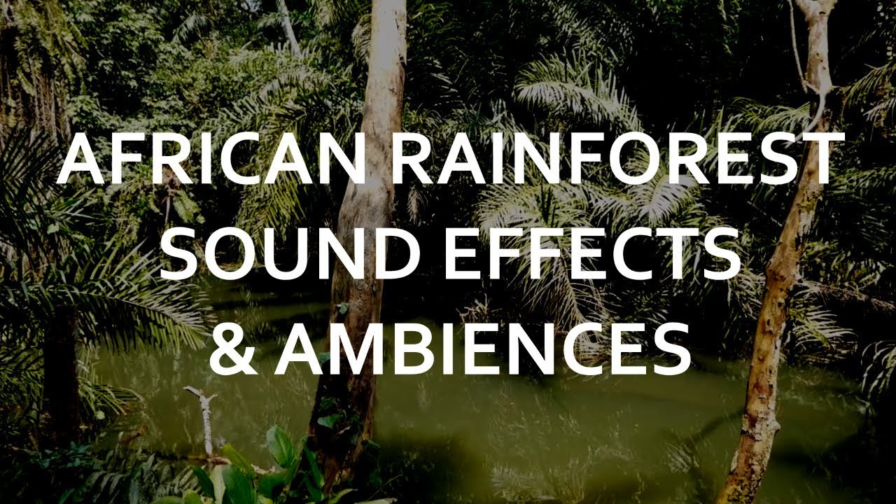 African Rainforest - real sounds of monkeys, birds and jungle wildlife