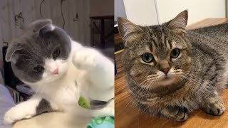 Adorable Cats Video # 14