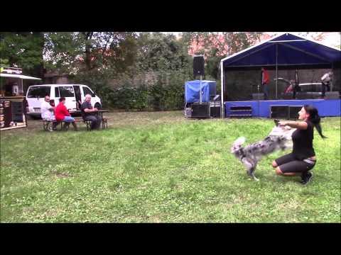 Anička a Coffee - vystoupení dog dancing na Psích dnech v Postoloprtech